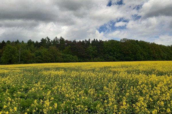 Prodej, Pozemky - zahrady, 11733m²