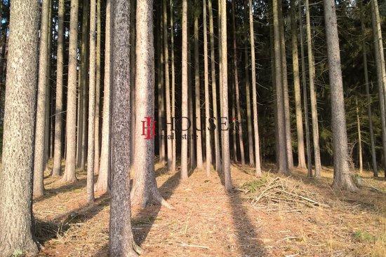 Prodej, Lesy, 52602m² - Chýstovice - Jedlina