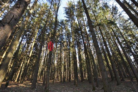 Prodej, Lesy, 1365693m² - Ražňany