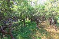 zahrada 04