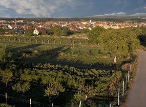 Prodej, Pozemky, Zahrady a sady, 350 m², Vranovice nad Svratkou