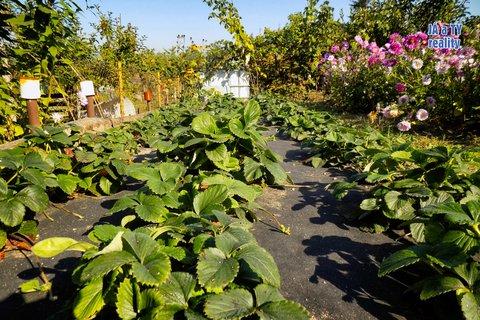zahrada012