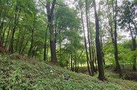 Prodej, Lesy, 24963m² - Rohozec