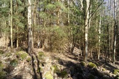 Prodej, Lesy, 13392m² - Semily, Ev.č.: 00001