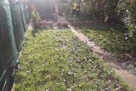 zahrada _