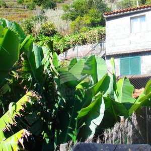 Prodej Rodinného domu 85m² - Madeira- Ponta do Sol, CP 471 m2
