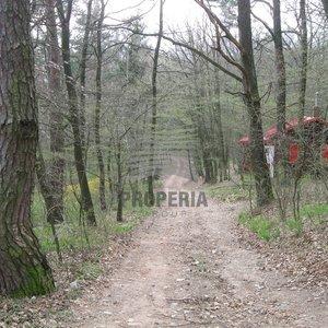 Nabízíme lesní pozemek o CP 680 m2, Moravany - Páníháj, okres Hodonín