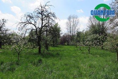 Prodej, Pozemky - zahrady, 3602<em>m²</em> - Lobodice, Ev.č.:00251