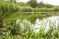 Slabův rybník 6