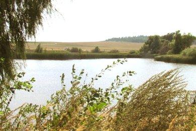 Silniční rybník 1