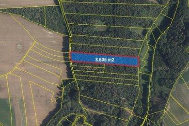 Prodej, Lesy, 8605m² - Golčův Jeníkov - Sirákovice, Ev.č.: 00357