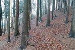 Prodej lesního pozemku v Náchodě na Jizbici
