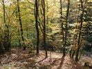 porost s listnatým lesem