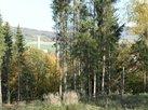 Prodej lesa ve Velkém Poříčí