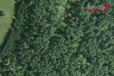 Prodej, Lesy, 3503m² - Kuřimská Nová Ves, Ev.č.: 00243