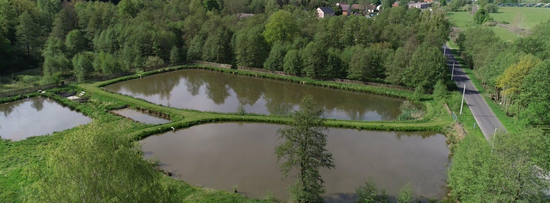 Soubor pozemků 120 ha nedaleko zámku Lemberk, rybníky, louky, lesy a sádky s prodejnou