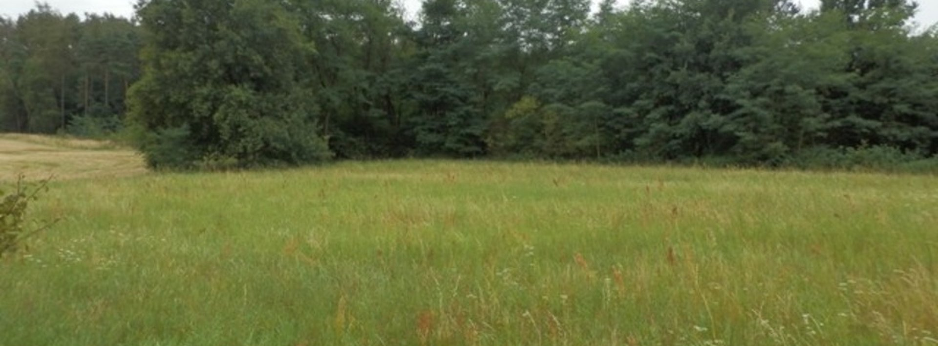Prodej pozemku na samotě, u lesa, 4654m², Ev.č.: N46435