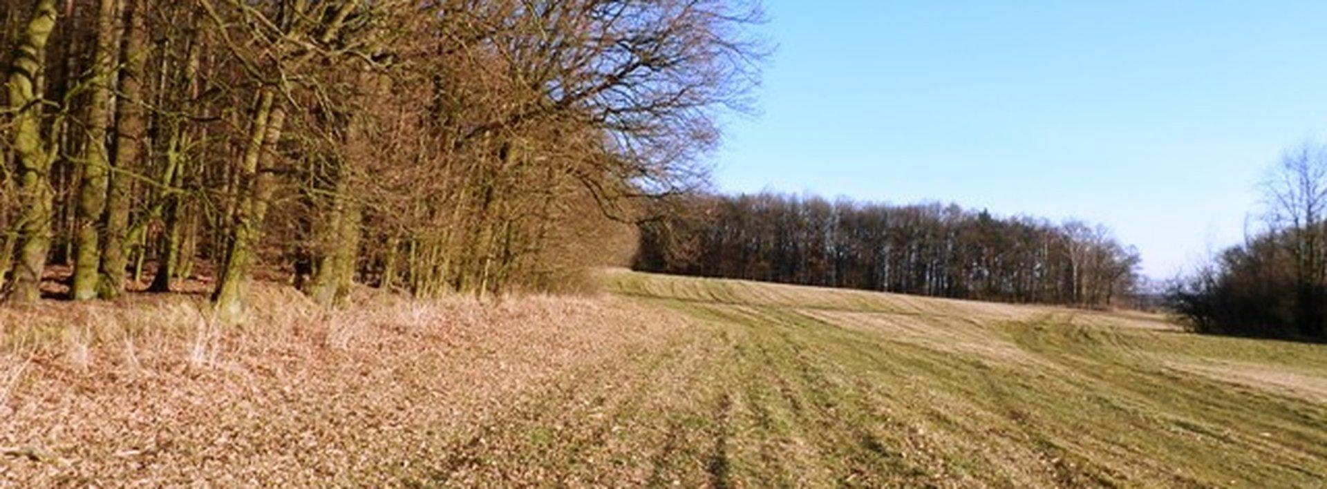 Prodej lesa na výhodném místě u Kasalic, 5461 m², Ev.č.: N47142