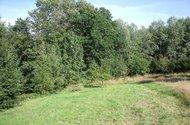 Další část pozemku s ovocnými stromy