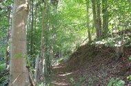 Ze soukromého pozemku vstup rovnou do lesa