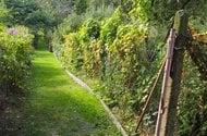 N47866_zahrada_společná cesta
