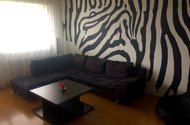N48056_OP s malbou zebry