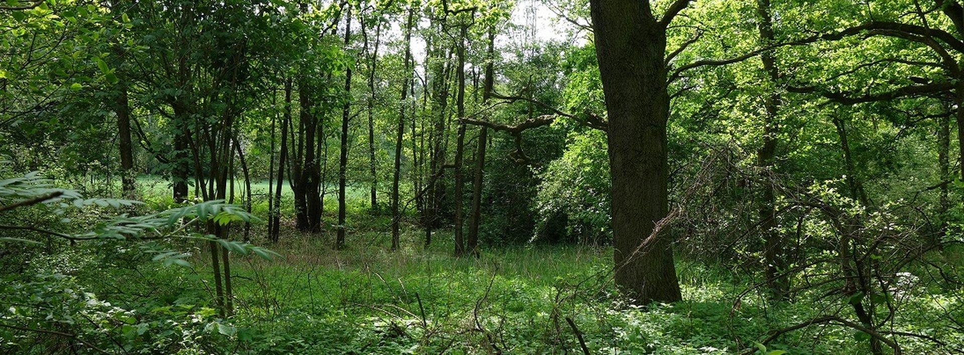 Prodej lesních pozemků 23.420 m² - Lázně Bohdaneč, Lohenice