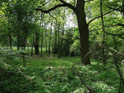 Prodej, Lesy, 23420m² - Lázně Bohdaneč