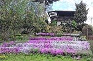 Terasovitá zahrada v létě.