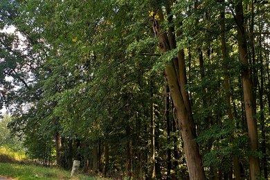 Prodej, Lesy, 21393m² - Holany - Hostíkovice, Ev.č.: 01158