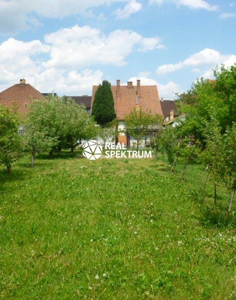 zahrada1