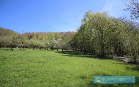 Prodej krásného pozemku s chatou k rekonstrukci, 8233 m² - Bystřice nad Pernštejnem - Kozlov, Ev.č.: 29614
