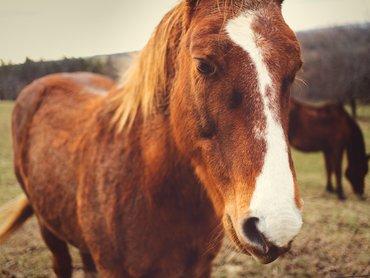 Kůň 1