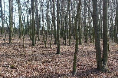 Prodej, Lesy, 3730 m², Ev.č.: 00256