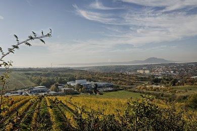 Prodej, Sady a vinice, 13500m² - Hustopeče, Ev.č.: 00379