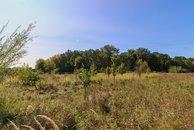 Novosedly pozemek zezadu stromy