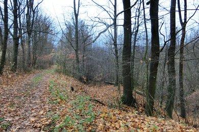 Prodej, les, Hodslavice, Ev.č.: 00541
