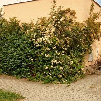 řadový rodinný dům 120 m2 Věkoše